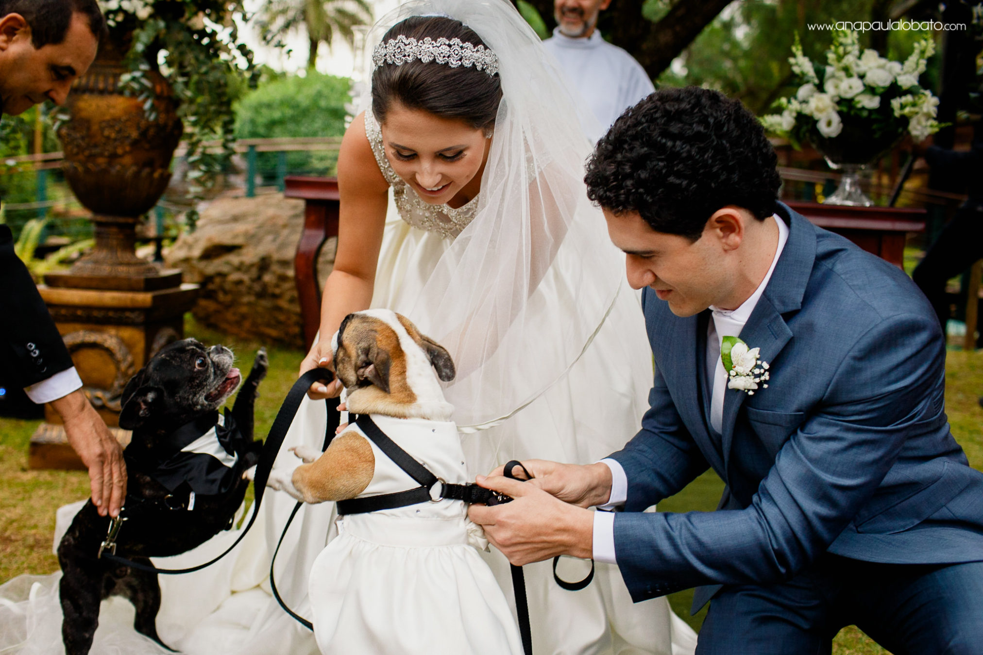 Cute dogs bring wedding rings to the couple